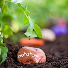 Veggies Rock! Decorate stones to create row markers that look like your crops.