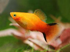 Aquarium Pump, Betta Aquarium, Betta Fish, Tropical Freshwater Fish, Freshwater Aquarium, Tropical Fish, Small Catfish, Aquarium Supplies, Aquarium Ideas