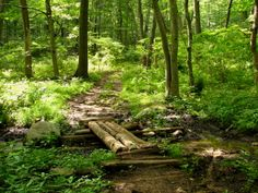 Allamuchy Mountain State Park, Hackettstown, NJ