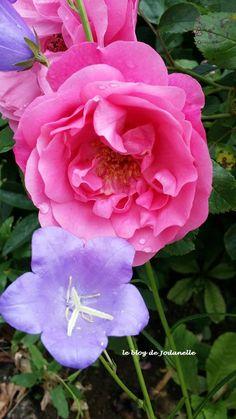 11 juin journée mondiale du bien-être http://club.beaute-addict.com/blog-beaute/commentaire-le-bien-etre-802301-0.php