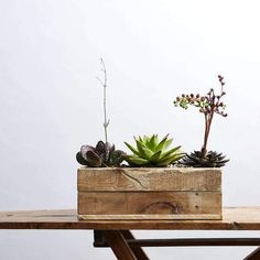 ⭐️⭐️⭐️⭐️⭐️ 5 star review: Impressed While the succulents that arrived didn't quite look exactly the same as the image - they were still very beautiful and looked good together! Was very impressed with the communicativeness of the team - and quick delivery! Succulents Online, Planting Succulents, Potted Plants, Indoor Plants, Low Maintenance Plants, Temperature And Humidity, Good Energy, White Vases