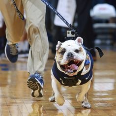 """""""Passion – Do not be lukewarm..."""" -The #Butler Way. #GoDawgs"""