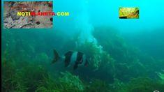 peces que caminan Desktop Screenshot, Drive Way, News