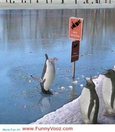 nice No Diving - funny sports