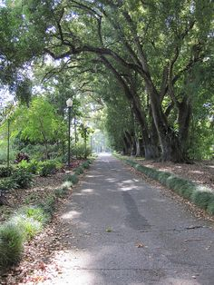 Harry P. Leu Gardens | Flickr - Photo Sharing!