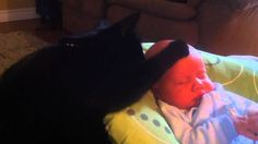 Motherly Cat Soothes Crying Baby to Sleep | The Animal Rescue Site Blog
