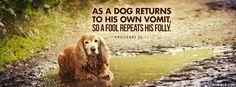 A Fool Repeats His Folly