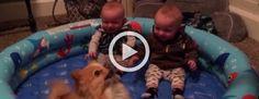 Este vídeo tiene solo 39 segundos de duración pero cada segundo es divertidísimo!
