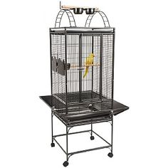 A generously sized cage with a play top section for your medium sized Parrot. Valencia, Parrot Perch, Parrot Cages, Senegal Parrot, Bird Cages For Sale, Bird Cage Stand, Love Your Pet, Conure, Parakeet