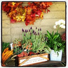 Acesflowers.com front plant display #Padgram