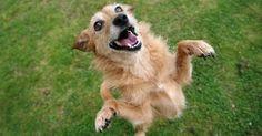 chien heureux fait la fête