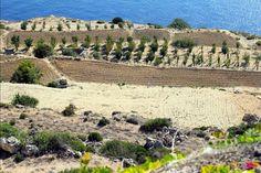 Malte - Falaises de Dingli http://www.happyusbook.com/