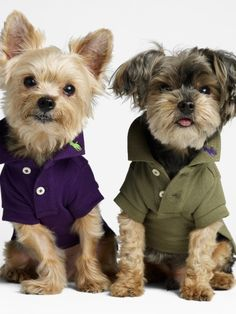 Oh my goodness, it's Jack and Gus!  How precious is a little pooch with a popped collar?!