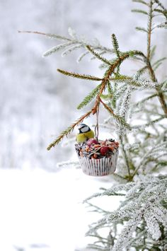Birdseed molded into a cupcake wrapper, and then hung on a pine tree branch.  Aww.  Love this simple idea for our little feathered friends.   :)   My life in the woods