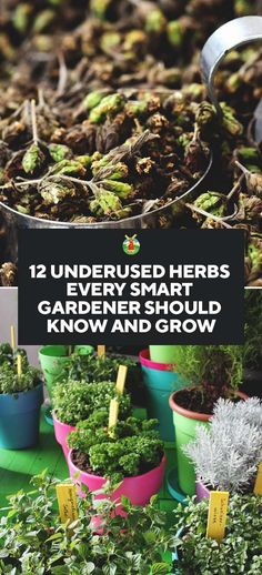12 Underused Herbs Every Smart Gardener Should Know and Grow