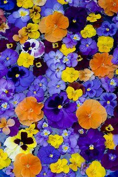 Pansies floating in bird bath Hippie Party, Language Of Flowers, Beautiful Flowers, Exotic Flowers, Purple Flowers, Ranunculus Flowers, Gerbera, Arte Floral, Planting Flowers