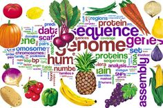 The Vegan Diet: Backed by Science
