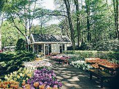 Good morning #travel #traveltheworld #traveling #garden #keukenhof #toulips #together #beautiful #nice #nature #cozy #atmosphere #mood #inspiration #good #morning #goodmorning#vsco  #vscocam #instalike #followme #instagram #instaminsk #minskinsta #minskgram #minsk #belarus #amsterdam #holand #nietherland by alesya_kaleko