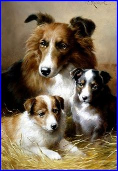 Vintage Collie with puppies.