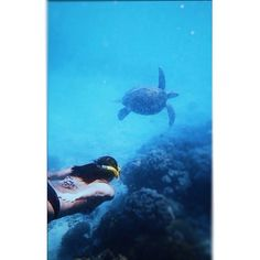 Chasing this guy at the Great Barrier Reef today. The name's Crush.  #greatbarrierreef #australia #findingnemo #snorkel #seaturtle #ocean #love #travel #nature by kimroach7 http://ift.tt/1UokkV2