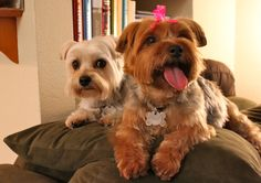 I <3 my puppies! Thanks Groovy Groomers for making them adorable.