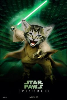 """Star Paws"" Cat Movie Mashups  -- Bored tonight? We've got something going on at the University of Iowa! Check out our pins or find our events at our website: cab.uiowa.edu"