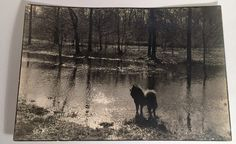 Hey, I found this really awesome Etsy listing at https://www.etsy.com/listing/468102587/vintage-photo-chow-chow-dog-pond-creek