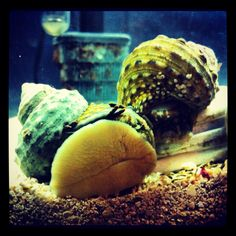 how to kill small tube snails in marine tank