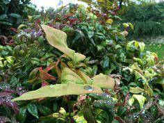 Leaf's essence