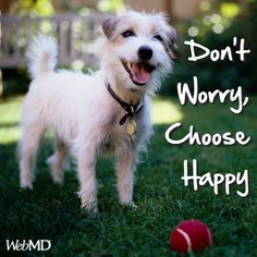 Don't let worries get the best of you, DECIDE on having a happy day!  http://on.webmd.com/TLZDUG