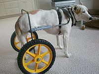 aw, all dogs needing wheels should have such an awesome setup. Definitely cool with the yellow