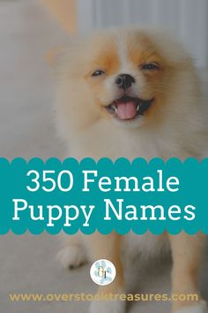 Hello pet lovers, dog lovers, dog owners and puppy owners. Are you a new pet owner? Did you just get a cute puppy or cute dog? Congrats! I created a list of unique dog names girl list. You are welcome to have my wonderful list of dog names girl unique list. This list is also for dog girl names for puppies. They are cut and unique puppy names female dogs.#puppy #puppynames #names #dognames #dog #doglove Puppies Names Female, Female Dog Names, Puppy Names, Pet Memorial Gifts, Cat Memorial, Cute Puppies, Cute Dogs, Unique Cat Names, Pet Loss Grief