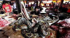 Pasar Tomohon, Gudangnya Kuliner Ekstrim