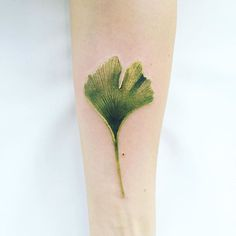The portrait of Gingko.#gingkobiloba #ginkotattoo #ginkobiloba…
