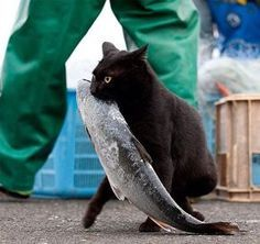 A tiny little Toothless stealing a fish... at least I wish!