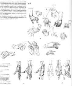 Anatomical drawings of hands from @characterdesigh #anatomy #hand #drawing