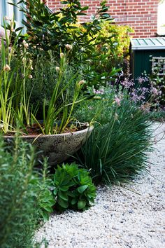 How To Create A Soft Perennial Garden Society garlic, coastal rosemary and Sedum 'Autumn Joy' form a soft green edge along the pea gravel, which is laid over a filter fabric that allows water to permeate. Back Gardens, Small Gardens, Coastal Gardens, Modern Gardens, Cottage Gardens, Amazing Gardens, Beautiful Gardens, Front Yard Landscaping, Landscaping Ideas