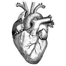 Desenho, Tatuagem, Coração Humano, Realista, Tattoo, anatomia, decalque, realistica