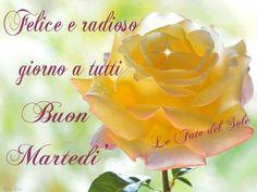 Rose, Flowers, Plants, Mario, Google, Italia, Pink, Plant, Roses