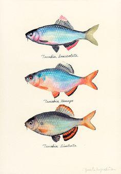 Japanese Artist Yusei Nagashima Creates Delicate Watercolor Paintings of Fish Every Week Watercolor Fish, Watercolor Animals, Watercolor Paintings, Paintings Of Fish, Watercolor Artists, Indian Paintings, Oil Paintings, Drawn Fish, Fish Drawings