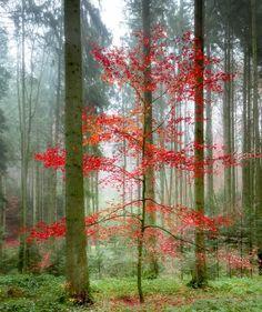 Last one   | Breathtaking Landscape Photographs By Myriam Spitz Mooser. theartinspiration.com