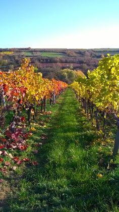 Herbstspaziergang durch die Weinberge bei Bad Dürkheim.