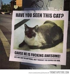 Have you seen this kitty?