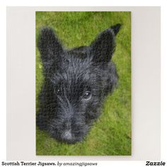Scottish Terrier Jigsaws. Jigsaw Puzzle