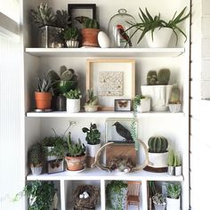 There's nothing like a good shelfie espeically when it's covered with plants like this one from @brangwynne in the #InteriorRewilding feed!  We share a new photo from #InteriorRewilding each week - tag your indoor jungle for a chance to be featured! by pistilsnursery