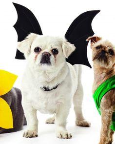 Bat Wings Harness. DIY pet costume. #doggiedash #hero4pets