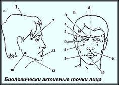 Биологически активные точки на голове - ваша скорая помощь 0