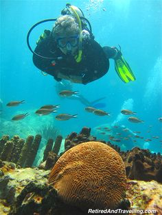 Brain Coral - Scuba Diving In St Lucia http://www.deepbluediving.org/zeagle-scout-bcd-review/