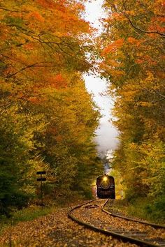 Two of my favorites - fall & trains