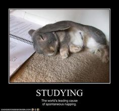 Studying: The World's Leading Cause of Spontaneous Napping.   Click to find Study Skills 101: How to Study for Finals.